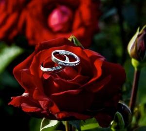 Rings on rose