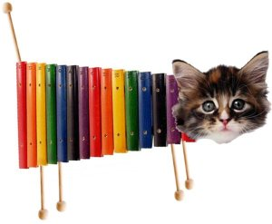 The Illusive Xylophone Cat
