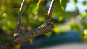 pruning-499257_1280