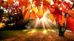 Autumn Leaves by: Luan Ahn